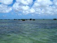 ... Rejoindre les mangroves...