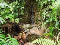 Micro ruisseau qui contribue aux sons apaisants de la forêt