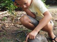 Il n'est pas rare de croiser des tortues terrestres