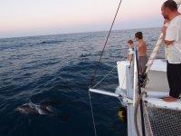 Accueillis par les dauphins colombiens