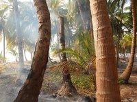 Luis brûlent les arbres condamnés