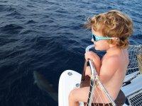 En route pour aller chercher Tom et Thomas, Loann est aux premières loges pour admirer les dauphins, .