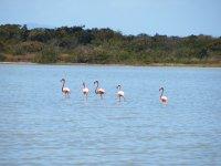 Lagon, Flamingo Pond
