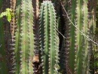 Les cactus sont présents partout sur l'île