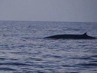 Un baleine ! cf article