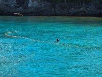 Filet de pêche autour de Coco d'îles... Cf l'article...