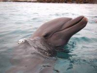 Un dernier portrait hors de l'eau... Merci Flipper !
