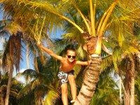 Tom ne peut pas s'empêcher de grimper les cocotiers