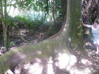 Les racines des arbres sont impréssionnates !