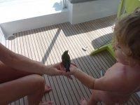 Etonnant ! un oiseau cherche à se poser sur moi... Même Loann aura pu le porter quelques secondes.