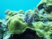 """Et ces petits """"goupillons"""", perchés sur un corail-étoilé, sont des vers-arbres de Noël !"""