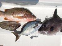 Oui, c'est ça : on mange du poisson tous les jours