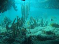 Coraux et poissons ont réhabilité le pont du bateau