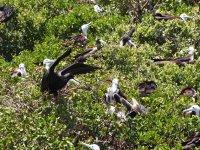 ... Une véritable réserve ornithologique
