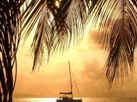 Coco d'îles s'endort dans un écrin doré