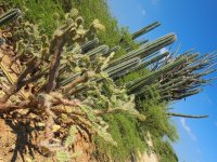 Des cactus, des cactus, encore des cactus...
