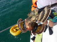 Le fameux « poisson-crapaud » qui a piqué Marc