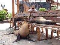"""Faut dire qu'après elles, on n'a pas trop envie de s'assoir sur les bancs : elles sentent un """"peu"""" le poisson quand-même !!"""