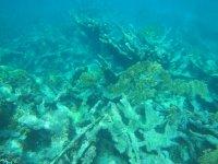 Triste cimetière de coraux morts