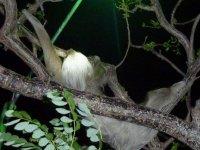 Ils vivent dans les arbres, en liberté