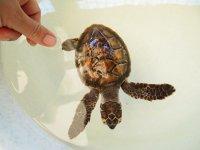 De nouvelles-nées recueillies le temps de devenir plus fortes pour survivre dans leur milieu naturel
