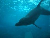 Nous, ce sera sous l'eau qu'on ira les rencontrer...