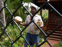 Son gardien nous offre des noix de coco