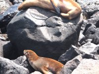 Elles sont partout sur les rochers