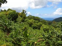 Végétation luxuriante de Grenade