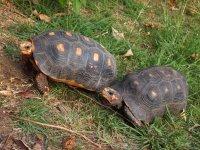 """Monsieur """"court"""" après Madame... Ces 2 coquines-là jouent à saute-tortue !"""