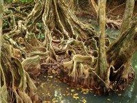 Ces entrelacs de racines sont spectaculaires