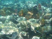 Un petit banc de poissons perroquets, une espèce que nous n'avions encore pas vue.